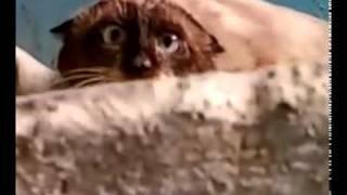 Кот в подъезде обнаружил идиота.mp4