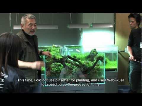 TAKASHI AMANO LAYOUT SEMINAR A 90cm aquarium tank . 2012.02.21