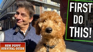 How To Prepare Your Canine to NOT LOSE Their MIND When You Go Anyplace! (EP: 11)