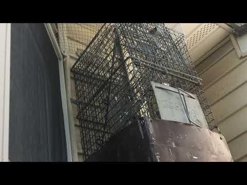 Wildlife Removal in South Brunswick, NJ