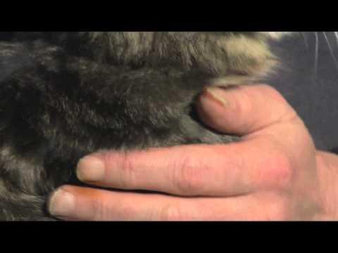 Sex kostenloses Video von Frauen mit Tieren beobachten