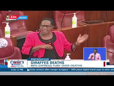 Senators have expressed outrage over the death of 3 Giraffes by electrocution at the Soysambu
