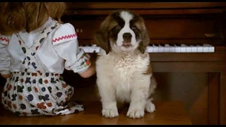 beethoven (1992)- beethoven as puppy scene