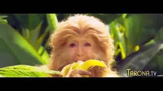 Maymunlar qrol tarjima kino uzbek tilida