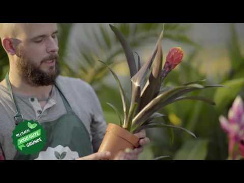 Der 1000 gute Gründe-Gärtner: Tristan macht Buschkasalla mit Bromelien