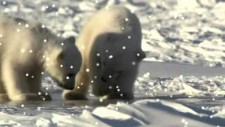 Боже, храни полярников (Аквариум)