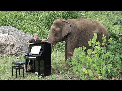 Man plays piano for an 80 year old Elephant
