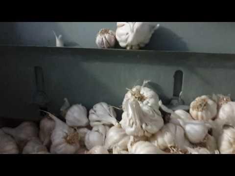 Garlic Bulb Cutter