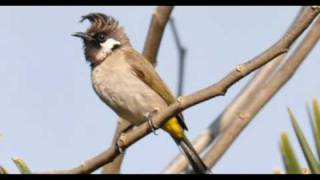 preview picture of video 'Nepal Kathmandu Langtang Birds Trek Package Holidays Travel Guide Travel To Care'