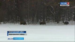 Охотоведы отправились подкармливать диких животных в лесах Новосибирской области