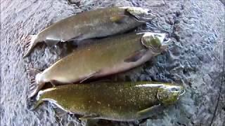 Рыбалка на лосося в канаде