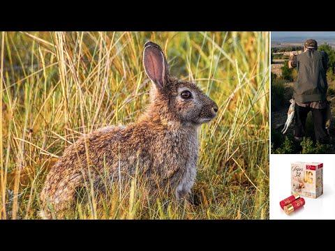Cazamos el conejo en verano con cartuchos JG Súper 32