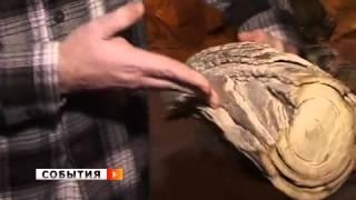 Находки дайвера будоражат воображение палеонтологов