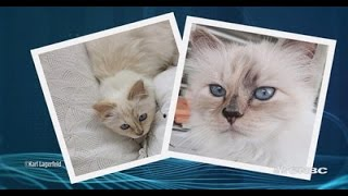 Karl Lagerfeld interview: Choupette is a 'full time job' | CNBC Conversation
