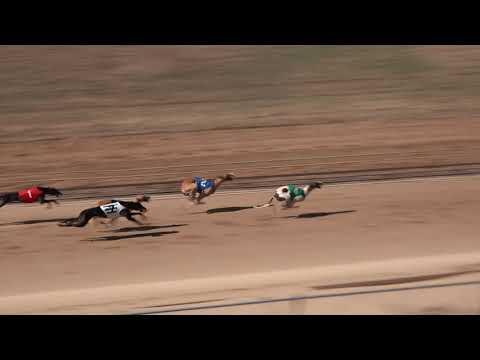 Race 39