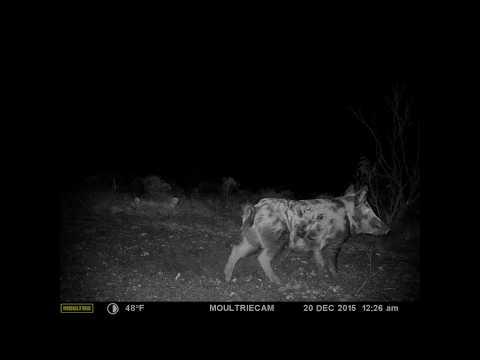 Lov v noci