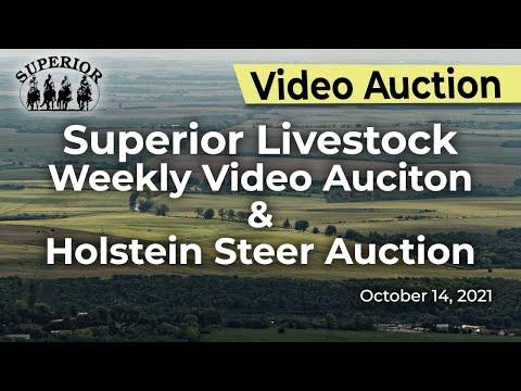 Superior Livestock Weekly Video Auction & Holstein Steer Auction