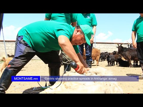Electric shearing practice spreads in Arkhangai aimag