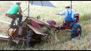1940s Style Oats Harvesting With IHC Grain Binder & Farmall B Tractor
