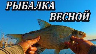 Турнир по ловле рыбы со льда химкинское водохранилище 2020
