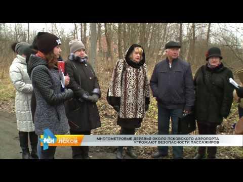 Новости Псков 23.11.2016 # Опасные деревья около псковского аэропорта