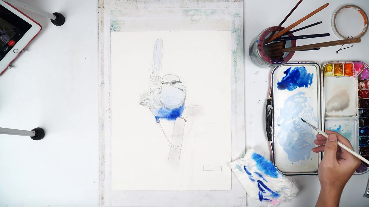 How to draw the bird with watercolor