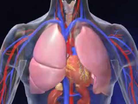 Linsuline transforme le glucose en graisse