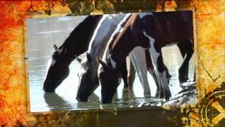 Chantal Kreviazuk - Wild Horses (Rolling Stones Cover) HD