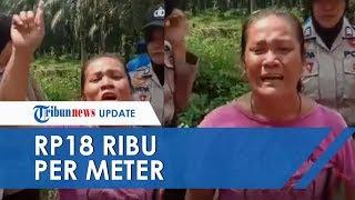 Viral Video Seorang Ibu Nangis Minta Tolong Jokowi, Lahan Sawit 5 Hektar 'Diganti' Semangkok Bakso