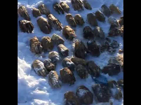 Вреке Амур обнаружили 52человеческих кисти рук. Обэтом сообщил источник всиловых структурах.