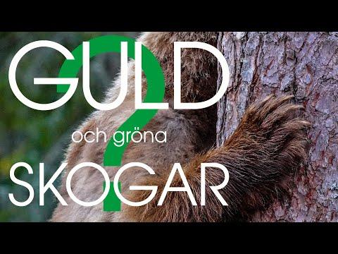 Film: Guld och gröna skogar?
