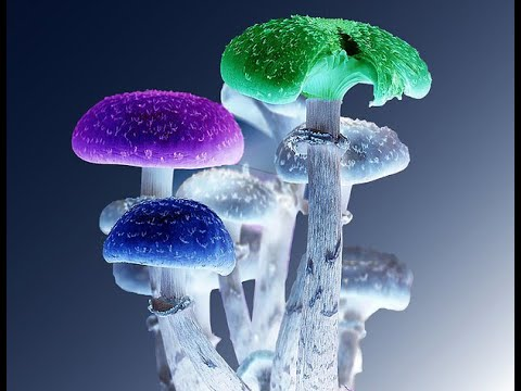STUDY: 1 Dose Of Shrooms Eases Anxiety & Depression Up To 5 Years!