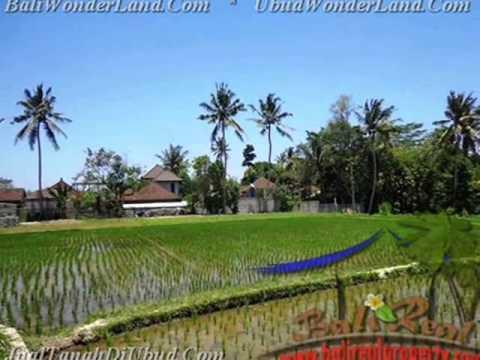 Potensial 300 m2 Lahan  View sawah  di Sentral Ubud TJUB436
