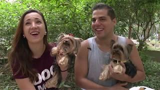"""Cães famosos nas redes sociais foram """"cãoferir"""" praça reformada na Aparecida"""