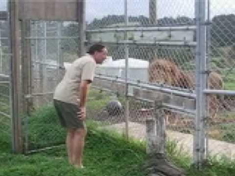 Return Craig Busch to Zion (The Lion man)