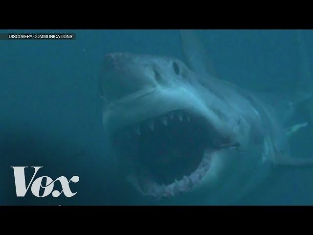 Does Megalodon still exist? Shark Week debunked