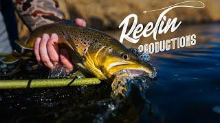 Fly Fishing in Western Colorado