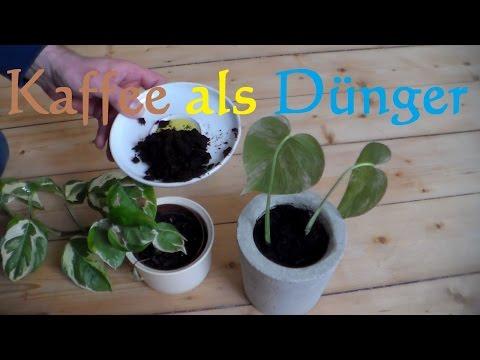 Kaffeesatz Dünger für Zimmerpflanzen - umweltfreundlicher Dünger für Pflanzen Gartenpflanzen