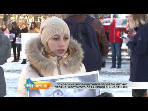 Новости Псков 07.11.2016 # Митинг против жестокого обращения с животными