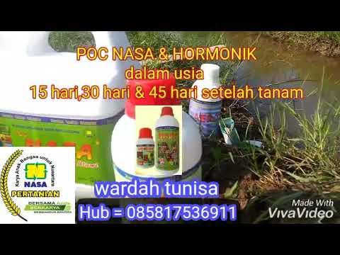mp4 Natural Nusantara Pertanian, download Natural Nusantara Pertanian video klip Natural Nusantara Pertanian