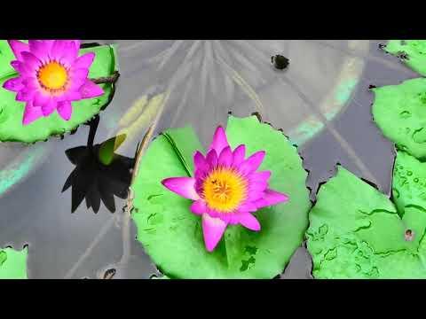 הסרטון הזה ייקח אתכם למקום עם יופי קסום במיוחד: הגנים הבוטניים בהונג קונג