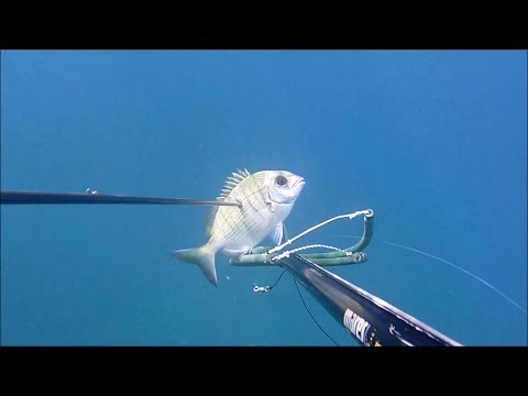 In linea immagazzini di tutti i fishings di battute di entrata
