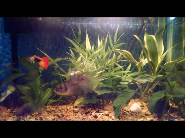 RKCB- Elevated(Joe Mason Remix) [ Half Moon Betta fish tank addition]