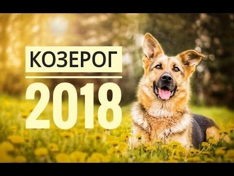 Год петуха 2017 гороскоп для всех знаков стрелец