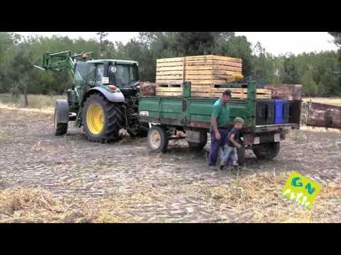Legumbres ecológicas y cereales orgánicos - Ajos y patatas ecológicas - generacionnatura.org