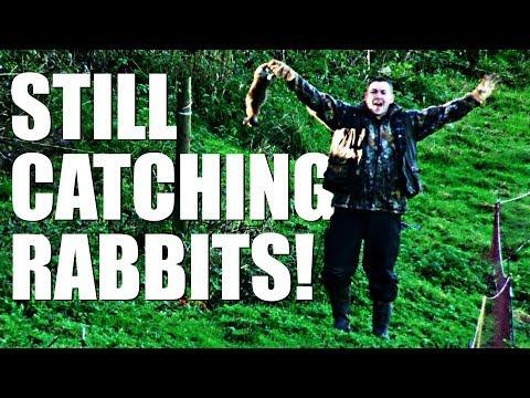 South Somerset Ferreters – still catching rabbits