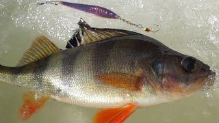 Зимняя рыбалка окуня на блёсна