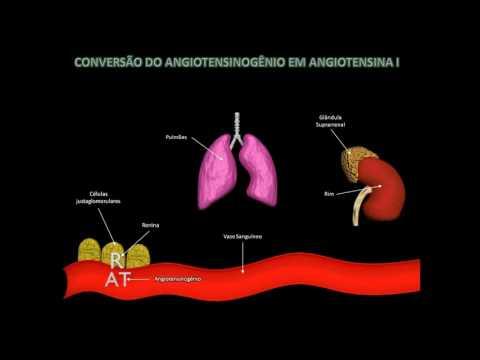 Tratamento da hipertensão girassol comentários sementes