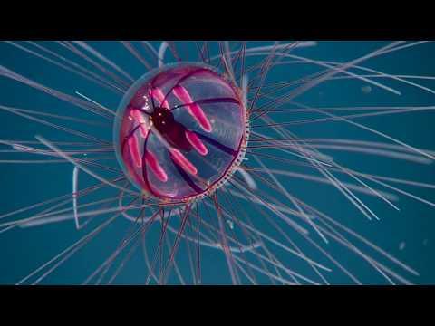 Stumbling Across a Psychedelic Medusa