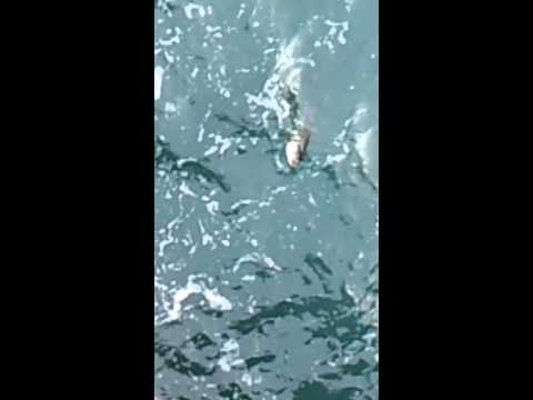 In totale su una pesca di avaro di video